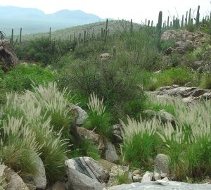 national_park_service_photo_fountain_grass