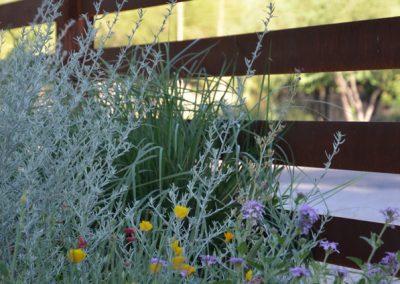el-montevideo-native-grass