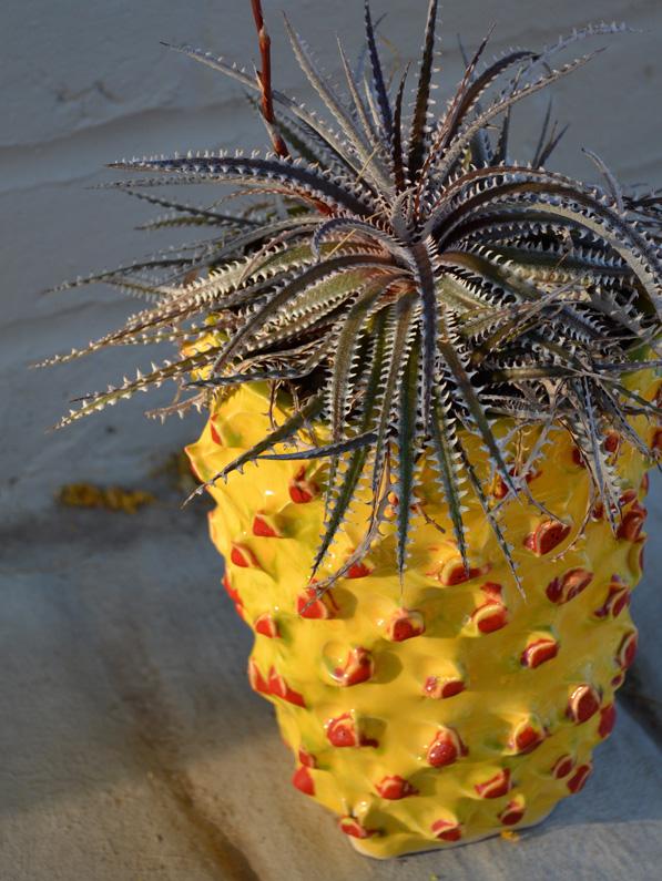 Red Bark Design Container Gardening Design Tucson